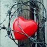 Love_hurts
